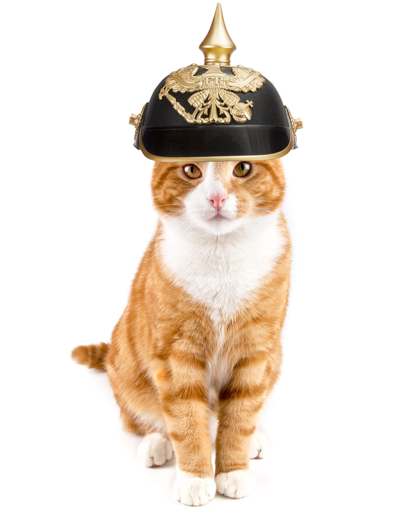 cat-wearing-german-helmet.jpg